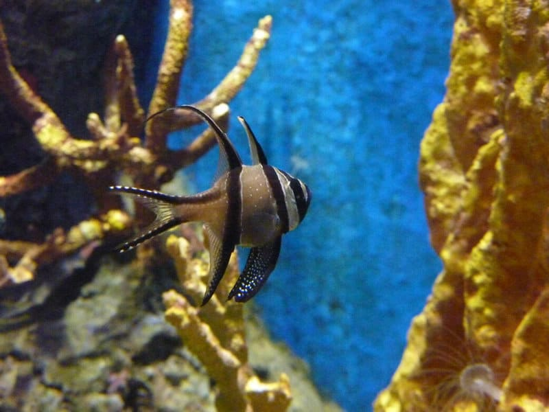 Tauchtipp August Galapagosinseln